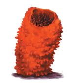 طريقة عمل و استخدام الحبار (الاخطبوط – الكاليمارى – السبيط ) كطعم للصيد بالجر