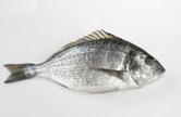 سمكة الشعم