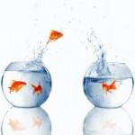 هجرة الاسماك – الجزء الثانى