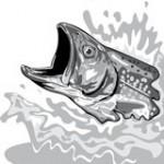 سمكة نازلي - مازيلي - European hake