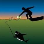 الطريقة الصحيحة لرفع الاسماك من الماء بواسطة الخطاف
