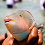 صور مهرجان صيد سمك الحريد 2010