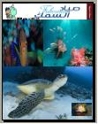 مجلة مدونة صياد السمك - العدد الخامس