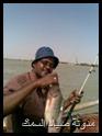 رحلة صيد البلطى بالنيل الابيض