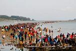 مهرجان انشقاق البحر فى جيندو Jindo Sea-parting Festival