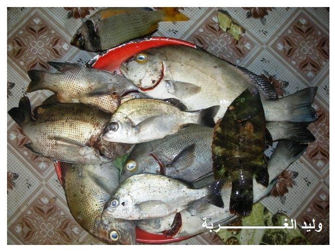 تصويرفيديو صيد اللبوستر او الاستكوزا