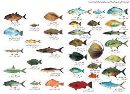 معلومات عن أسماك الخليج