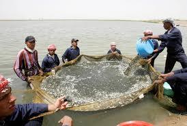 من طرق صيد الاسماك طريقة الصيد الخباطة و التحليق