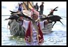 اماكن صيد السمك في دولة الامارات العربيه المتحده