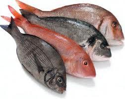 السمك أو الأسماك