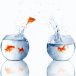 هجرة الاسماك - الجزء الثالث