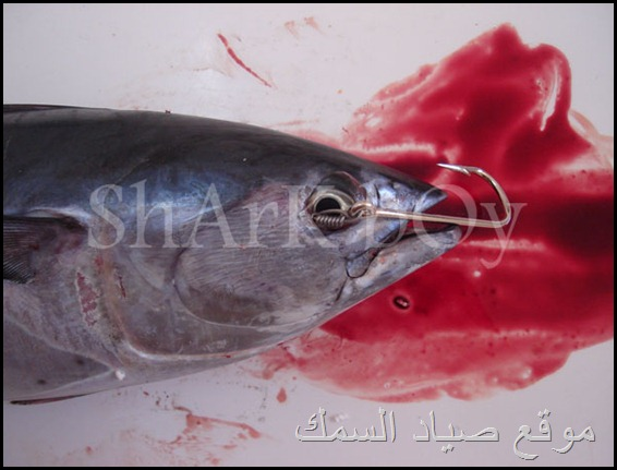 موقع صياد السمك