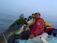 صيد اسماك القرش